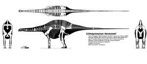 Limaysaurus skeletal