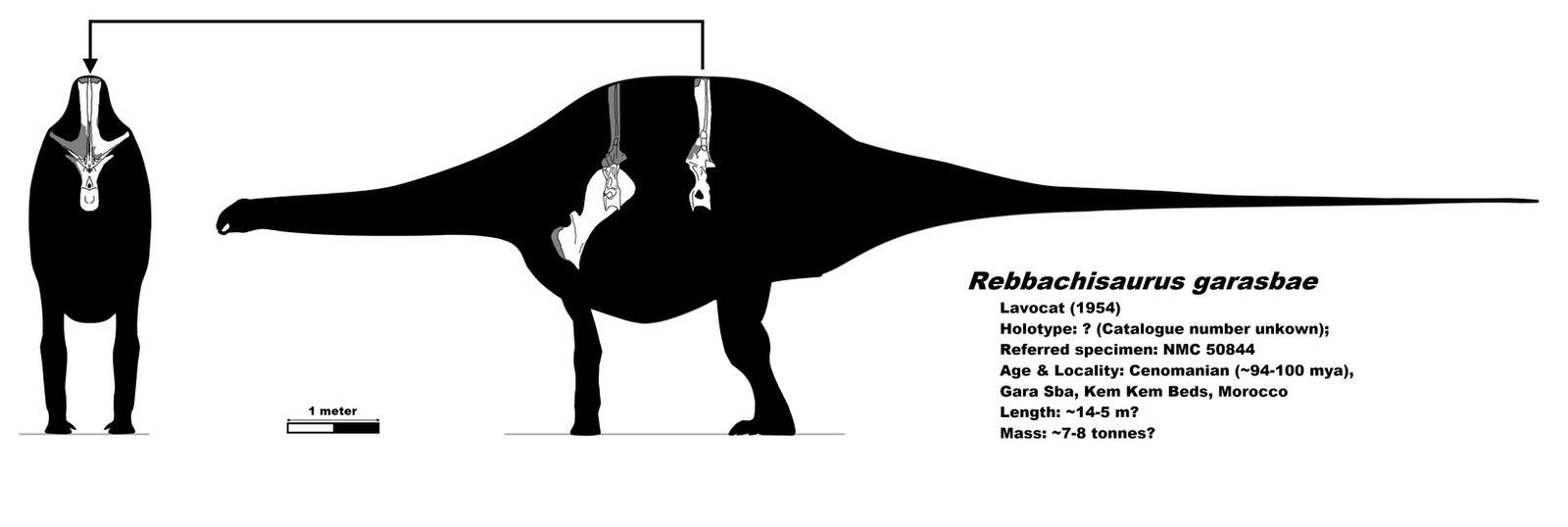 Rebbachisaurus skeletal by palaeozoologist