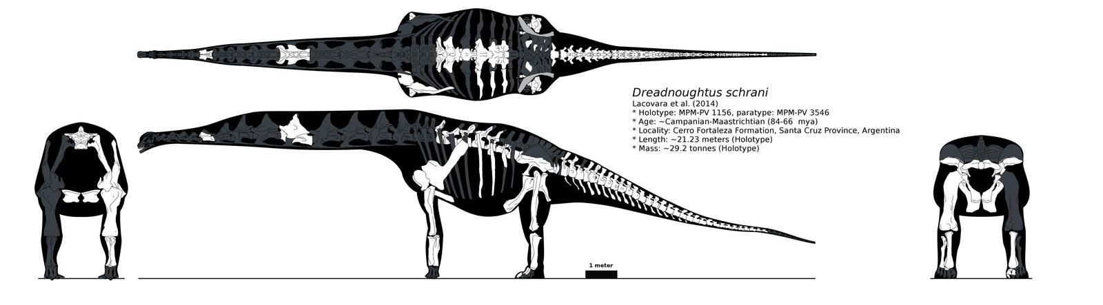 Dreadnoughtus  multiview skeletal