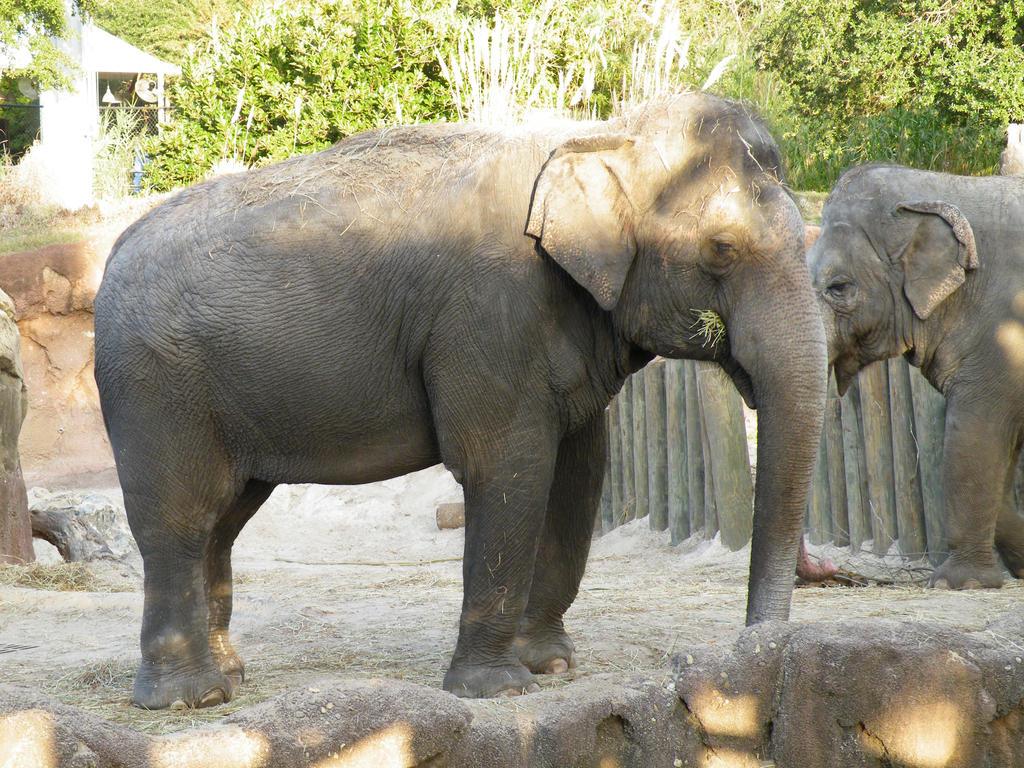 Asian Elephant by Disney-Queen-1 on DeviantArt