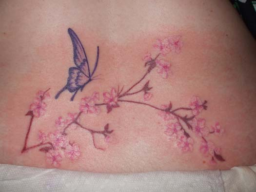 cherry blossoms and butterfly by alisonps