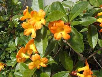Yellow Orange by artnovation