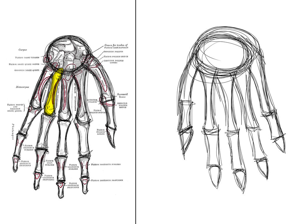 Sketch This: The Hand Bones by Diathima