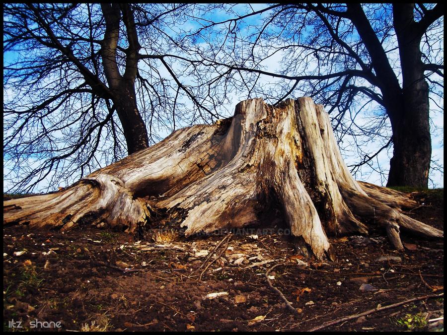 Tree Stump by IiTz-ShAnE