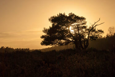 Autumn tree silhouette at sunset by FrankvanderHoeven