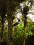 the palm climber