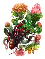 Ants ate my Plants