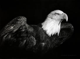 AMERICAN PRIDE by MiroDesign