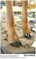 Deer Hooves by Della-Stock