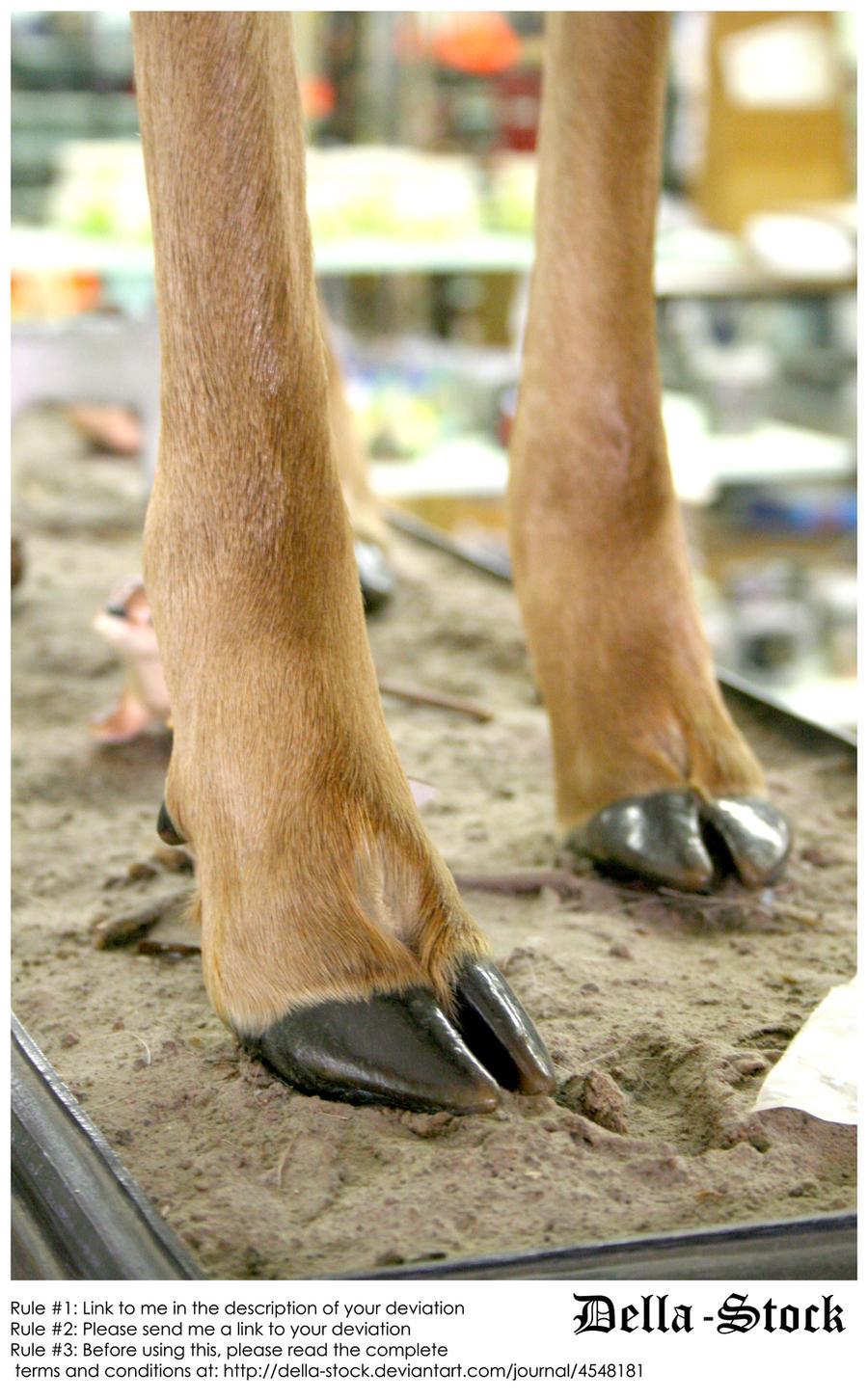 Deer Hooves