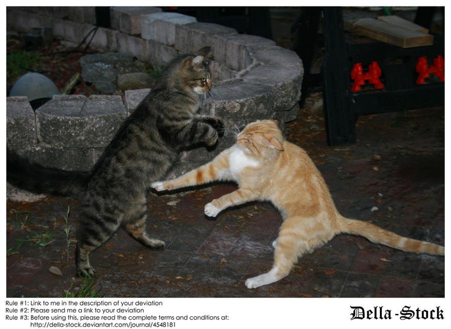 Cat Fight by Della-Stock