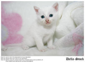 White Kitten by Della-Stock
