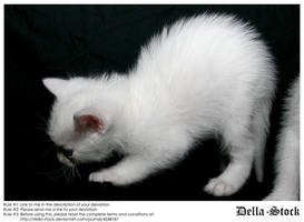 White Kitten Arched Back by Della-Stock