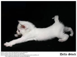 White Kitten Stretch by Della-Stock