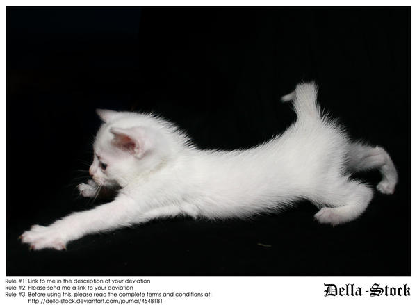 White Kitten Stretch