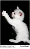 White Kitten Attacks by Della-Stock