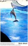 Sea World: Dolphin