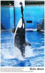 Sea World: Shamu Jump.6