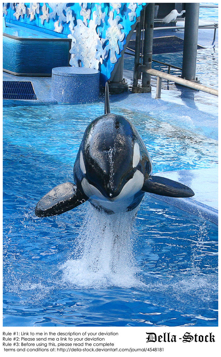 Sea World: Shamu Jump.11 by Della-Stock