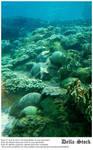 Sea World: Dolphin Cove