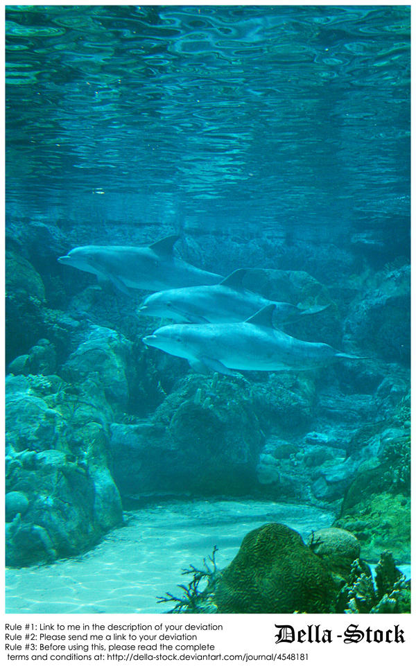 Sea World: Dolphin Cove.5 by Della-Stock