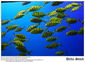 Sea World: Yellow Fish by Della-Stock