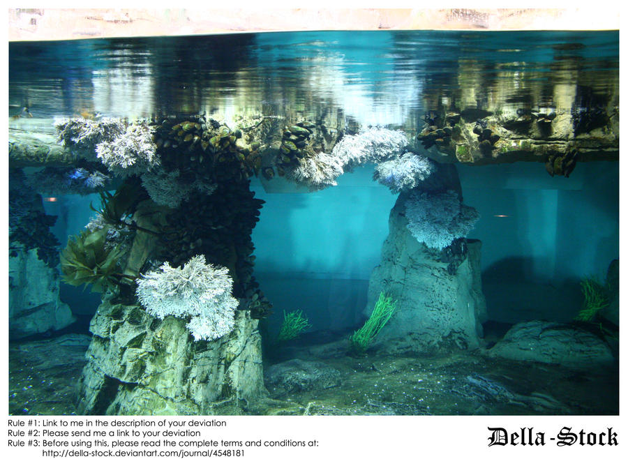 Sea World: Underwater by Della-Stock