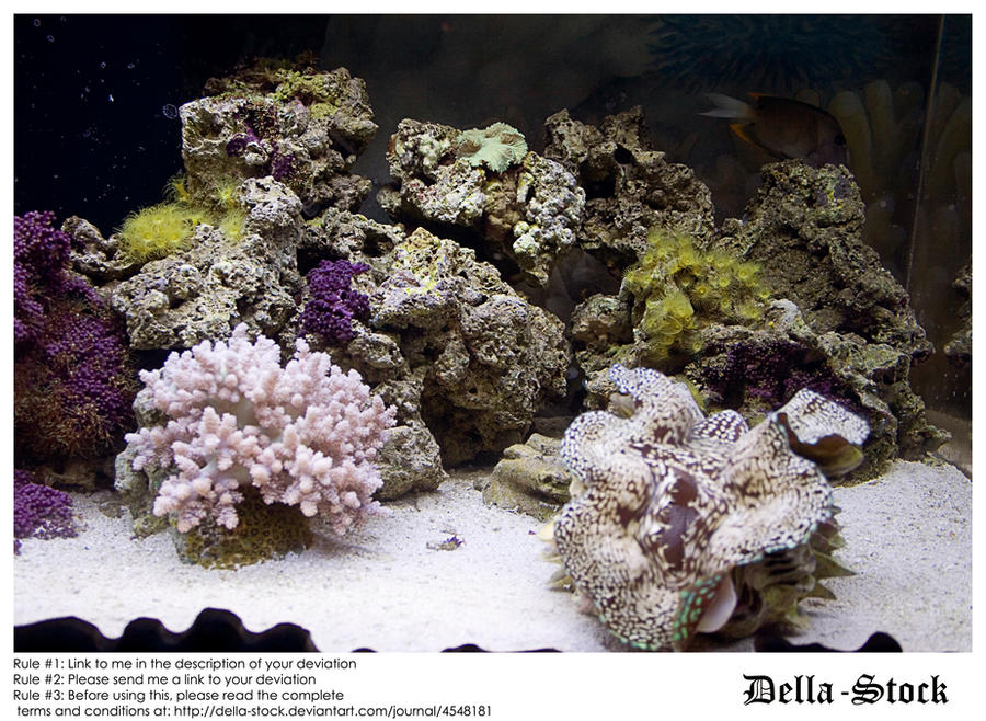 Sea anemoneeees by Della-Stock