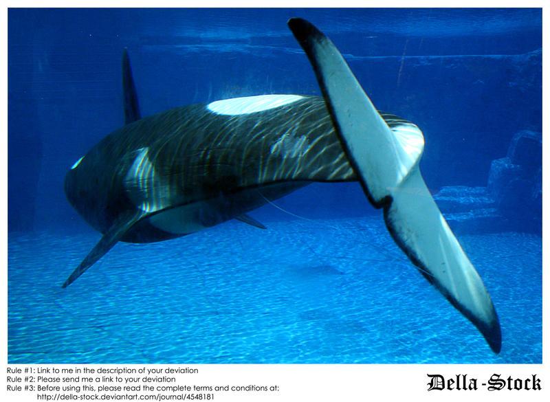 SW FL Orca.10 by Della-Stock