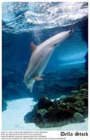 Dolphin Dive by Della-Stock