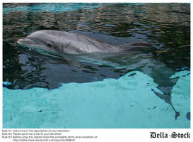 Dolphin Head Above Water by Della-Stock