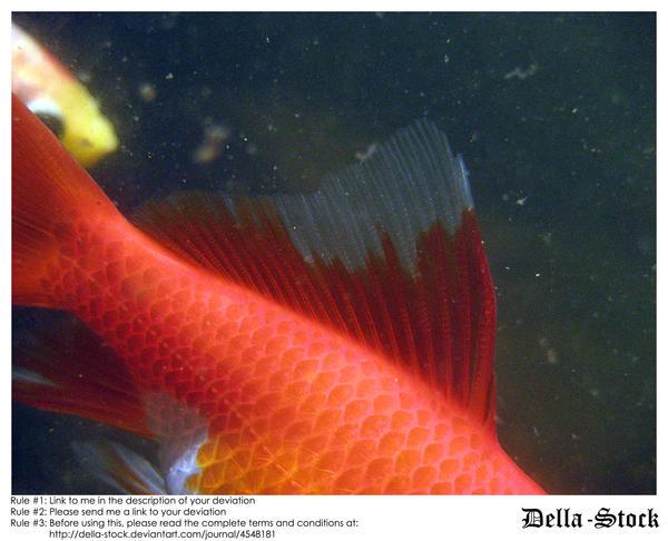 Goldfish Fin by Della-Stock