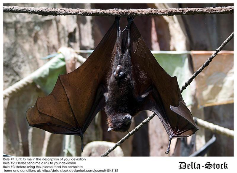 Fruit Bat Wings Front by Della-Stock