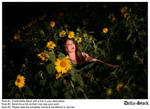 In the Sunflowers.9
