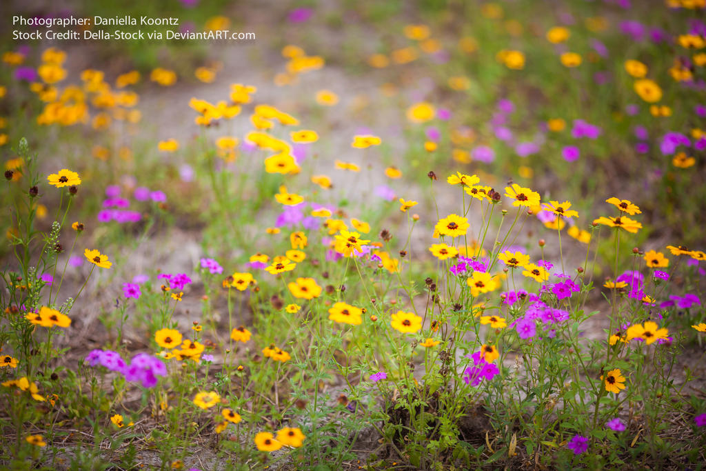 Wildflower Texture by Della-Stock