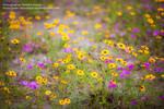 Wildflower Texture