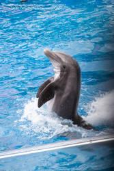 Dancing Dolphin.3 by Della-Stock