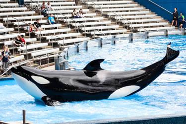 Sea World Orca by Della-Stock