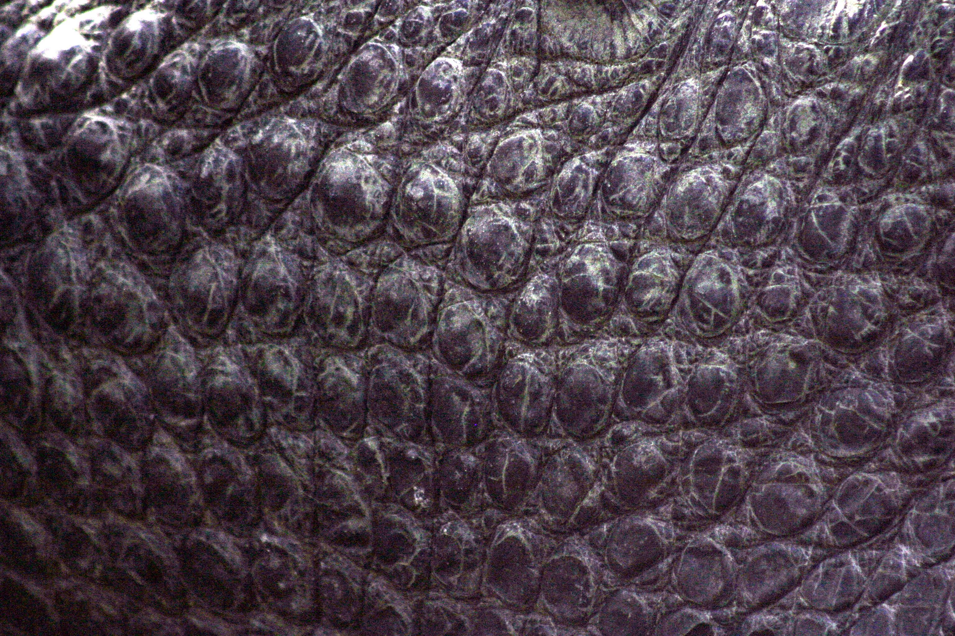 Gator Skin by Della-Stock