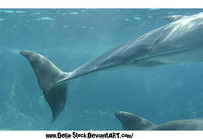 Dolphin Tail Stock.2 by Della-Stock