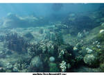 Under The Sea-The Ocean World2