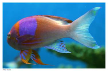 Ripley's: Red Fish.2 by Della-Stock