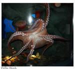 Ripley's: Octopus Underside