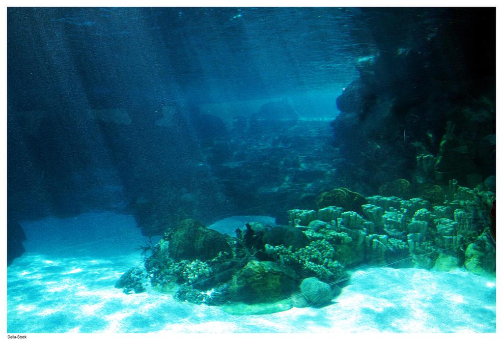Underwater Ocean Floor Light by Della-Stock