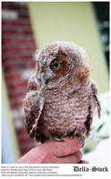 Owl on Finger by Della-Stock