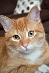 my pretty eyed kitty by jeanbeanxoxo
