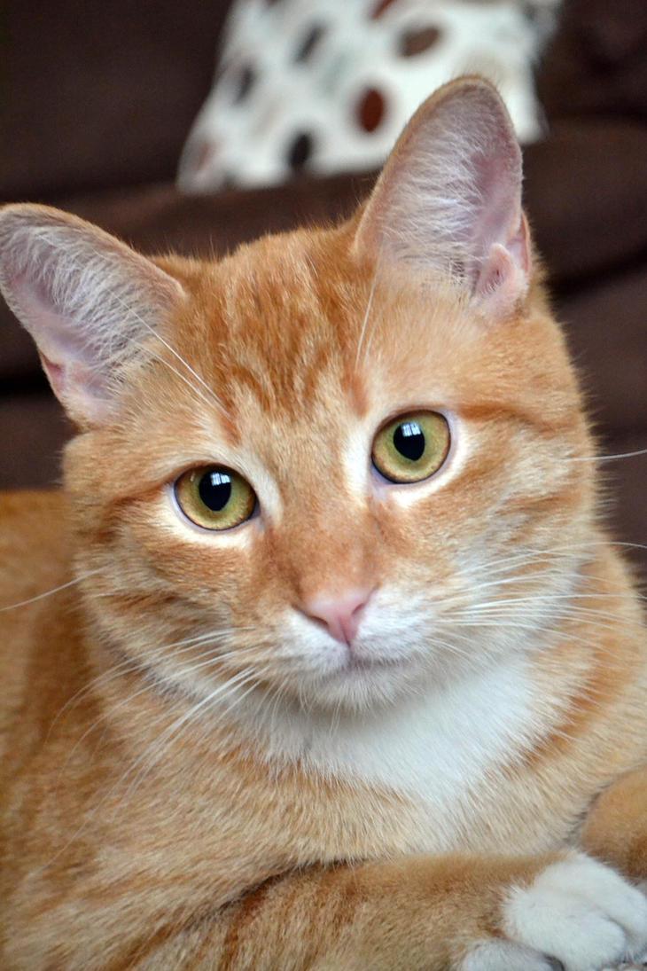 my pretty eyed kitty by beLIEveyourheart