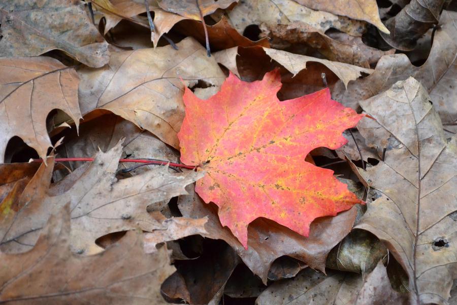 fall by beLIEveyourheart