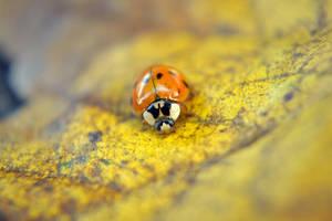 lady bug by jeanbeanxoxo
