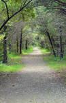 a quiet path